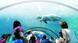 Detroit Zoo has more than 1.5 million visitors in 2017, looks for great attendance in 2018 with Dinosauria, new bald eagle, renovated habitats