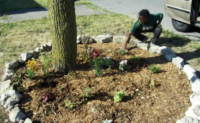 There's power in flowers … free blooms are available to Detroit residents