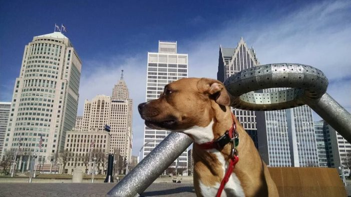 Detroit's River Dogs: Weekly dog walking builds lasting bonds