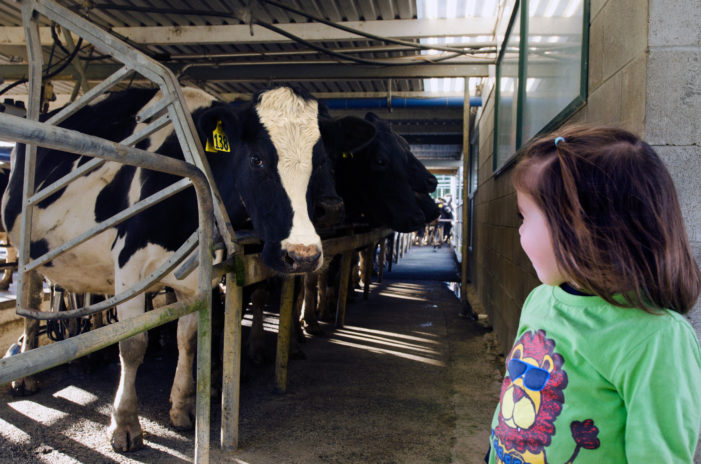 MOO U: Area youth invited to visit dairy farm