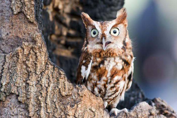COVID fatigue? Check out the Owl Prowl and Metroparks. It's a hoot!