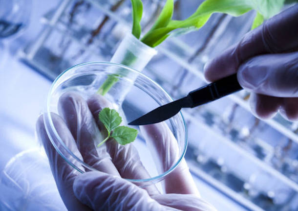 3rd Annual Congress on Plant Biology &Biotechnology
